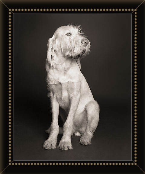 Newport, Rhode Island dog photographer specializing in studio pictures of dogs, cats, horses, people with animals