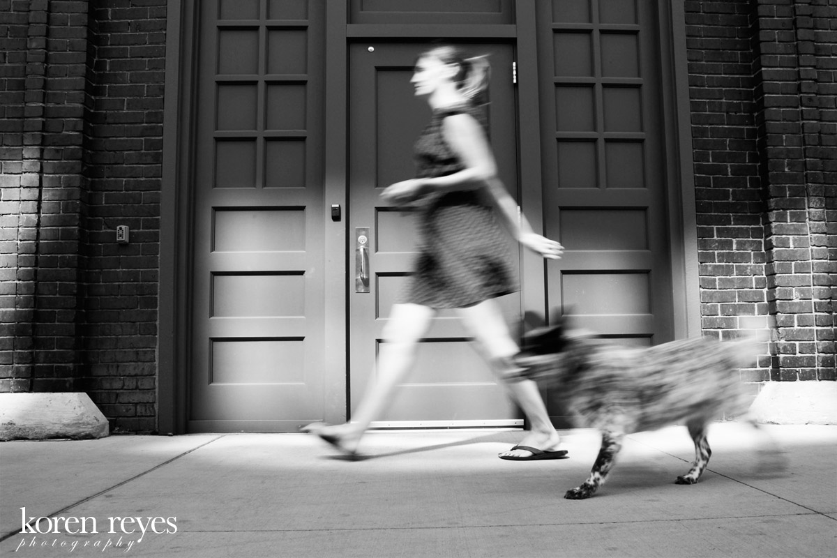 Ellie Mae strolls through the North Loop in downtown Newport, RI. Australian cattle dog portrait on the streets of Newport, RI